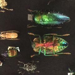科尼格博物館用戶圖片