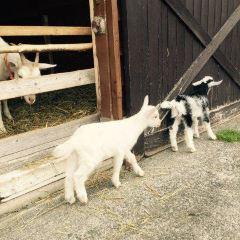 Tonden Farm Akaigawa Ranch User Photo