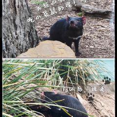 Bonorong Wildlife Sanctuary User Photo
