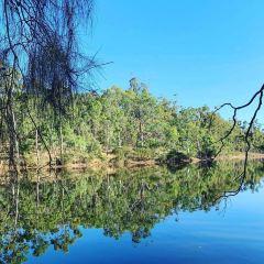 Cleland Conservation Park用戶圖片