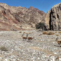 Red Canyon用戶圖片