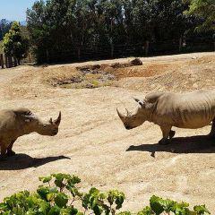 漢密爾頓動物園用戶圖片