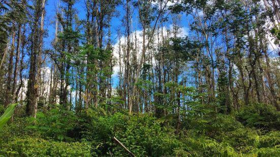 Koko Head Regional Park