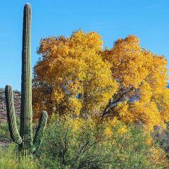 Sabino Canyon User Photo