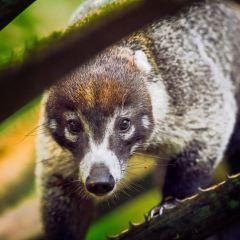 Panama Rainforest Discovery Center User Photo