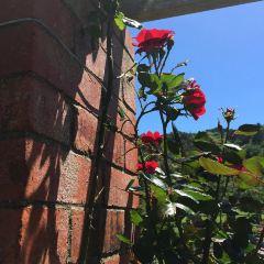 Lady Norwood Rose Garden User Photo