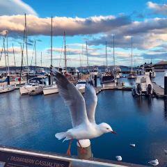 Elizabeth Street Pier User Photo