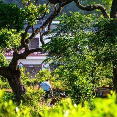 裡羅城景區用戶圖片