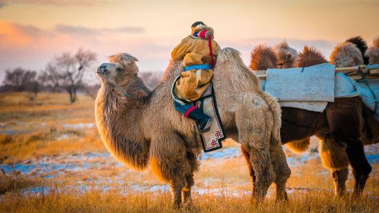 烏珠穆沁草原