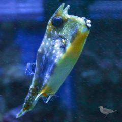 Ozeaneum User Photo