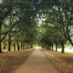 St.Anne's Park User Photo