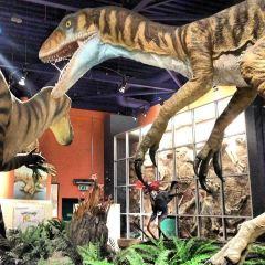 Dinosaur Isle用戶圖片
