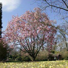 Savill Garden用戶圖片