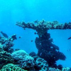 Underwater Observatory Marine Park用戶圖片