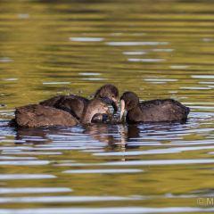 Lake Te Koutu User Photo