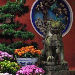 진디엔공원 꽃구경 여행 사진