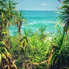 叢林海灘用戶圖片