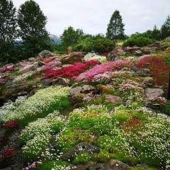 The Arctic Alpine Botanic Garden User Photo