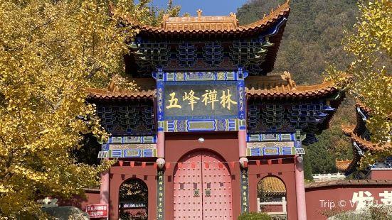 禪林寺古銀杏風景園