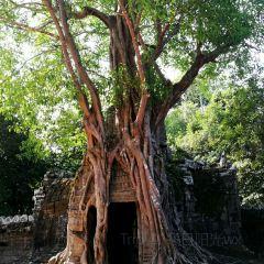 Ta Prohm寺廟用戶圖片
