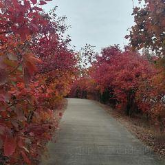 Hongshancuigu Sceneic Area User Photo