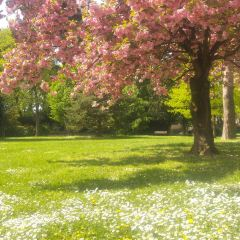 Parc Henri Matisse用戶圖片