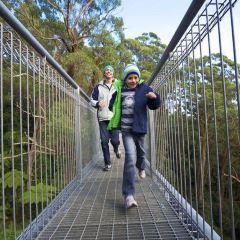 Illawarra Fly Treetop Walk User Photo