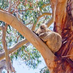 Hanson Bay Wildlife Sanctuary User Photo