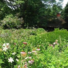 莎士比亞公園用戶圖片