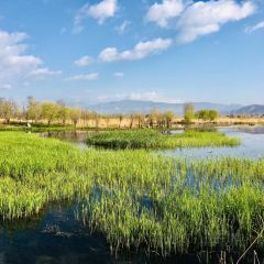 Dalishi Luoshijiang Ecology Wetland User Photo