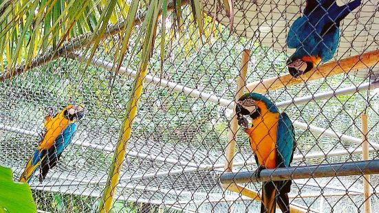 Uncle Sandy's Macaw Bird Park