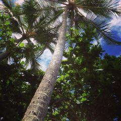 霍洛維海灘用戶圖片