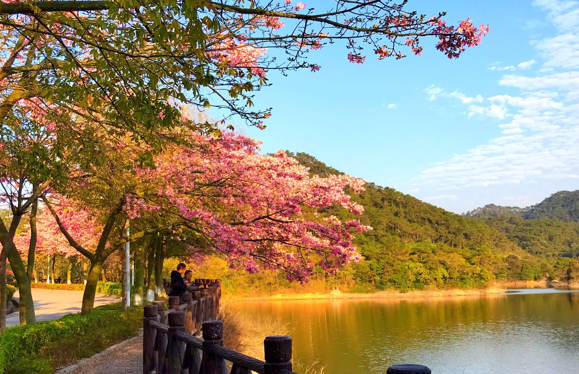 Donglong Forest Park