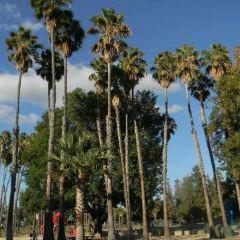 Las Palmas Park User Photo