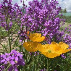 Lubinghua Park User Photo