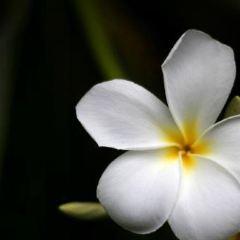 Maire Nui Botanical Gardens User Photo