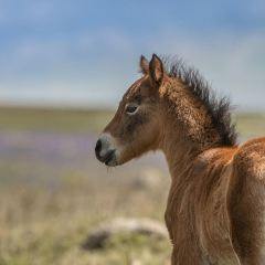 Dartmoor National Park User Photo