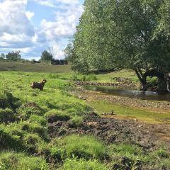 Smith Family Farm User Photo
