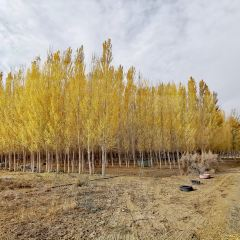 軍燕沙漠生態旅遊景區用戶圖片