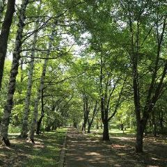 綠之丘公園(帶廣市)用戶圖片