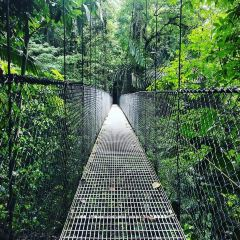Mistico Arenal Hanging Bridges Park User Photo