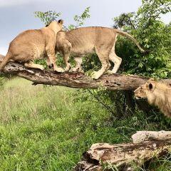 Antelope Park User Photo