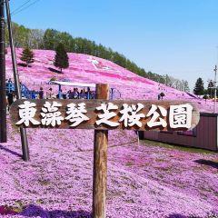 Shibazakura Park User Photo