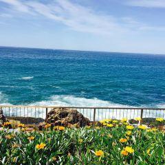 curl curl beach User Photo