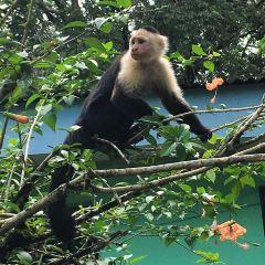 Cahuita National Park User Photo
