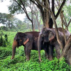 Elephant Valley Thailand User Photo