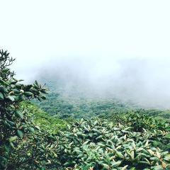 Monteverde Cloud Forest Biological Preserve User Photo