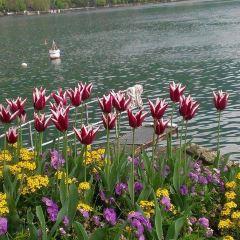 弗勒力湖岸步行區用戶圖片