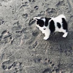 Finns Beach Club User Photo
