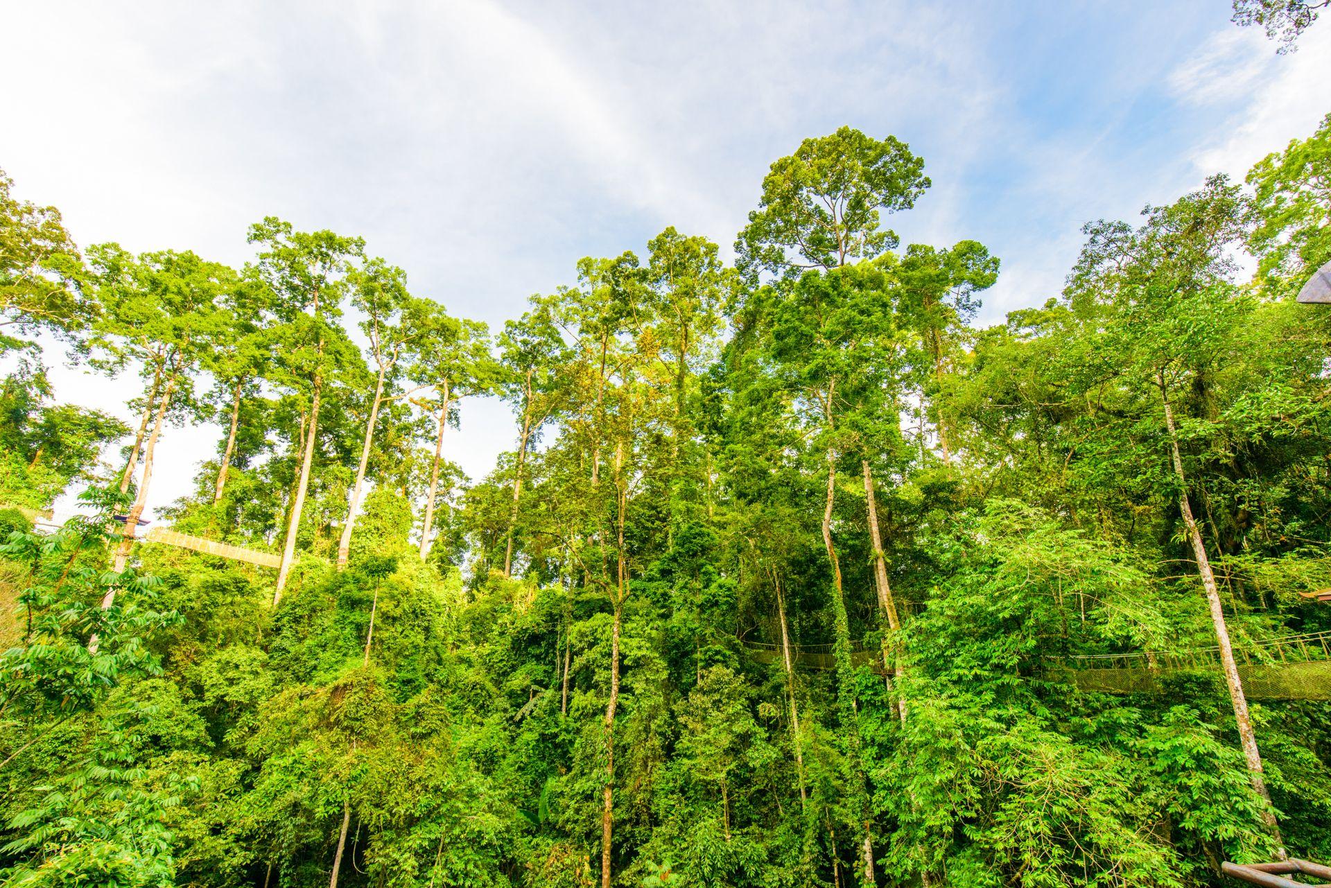 西雙版納熱帶雨林自然保護區